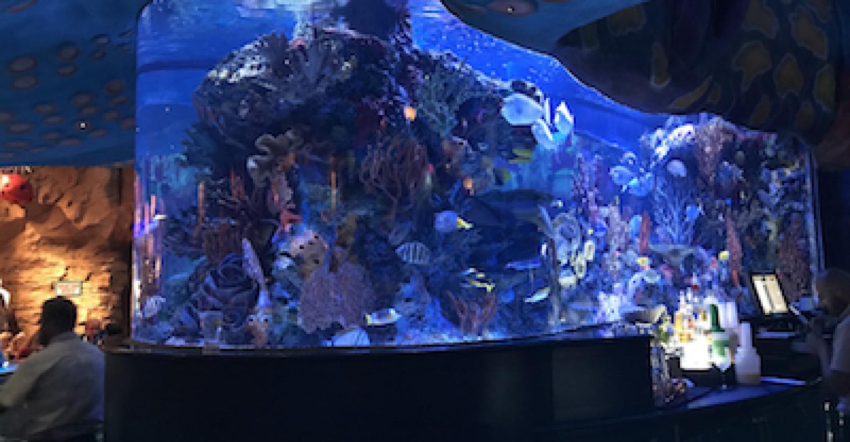 When acrylic aquariums fail   plasticstoday.com