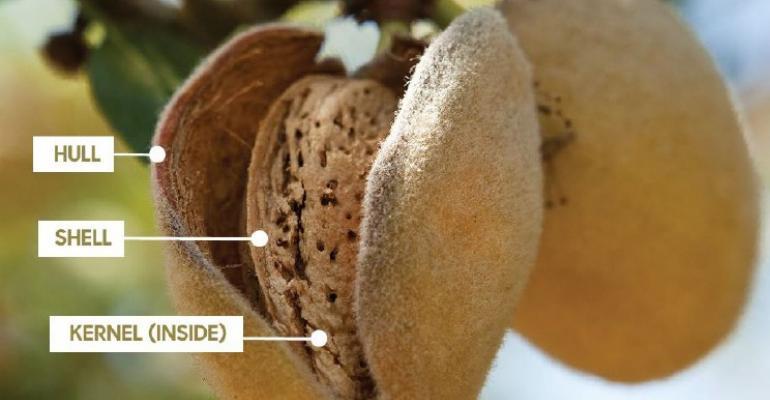 Almond parts diagram