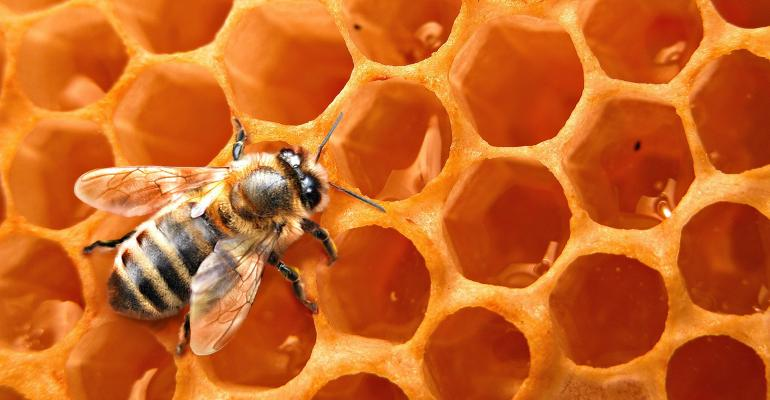 Bees test building skills with waste plastic