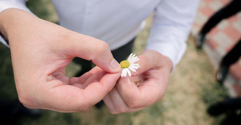 man picking daisy leaves