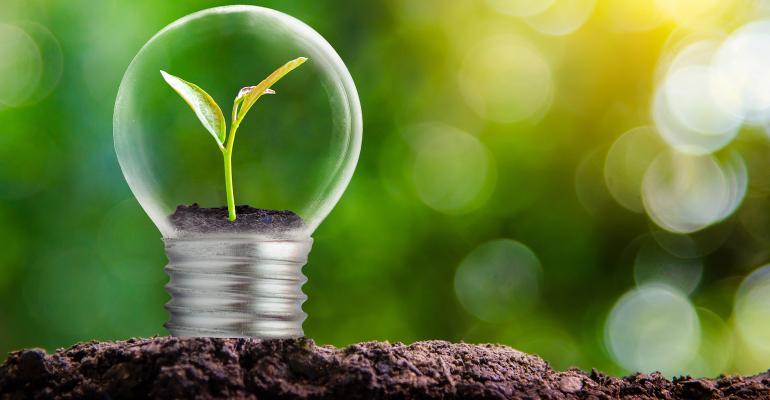 green shoot in lightbulb