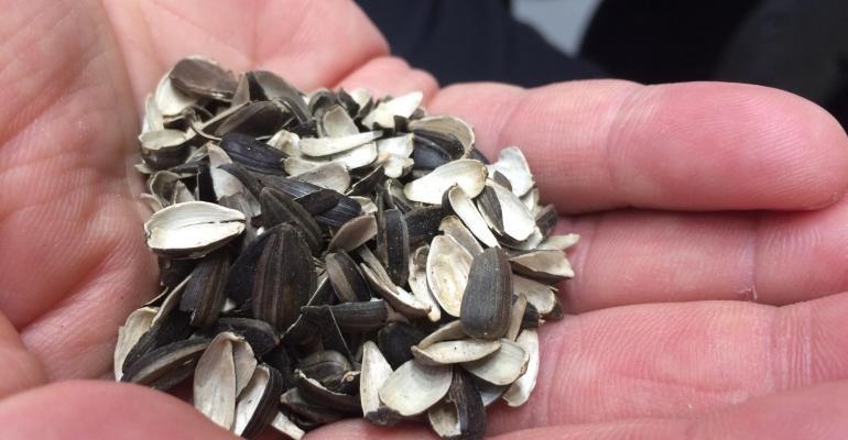 Golden Compound harnesses sunflower power to create fiber-filled biocompound